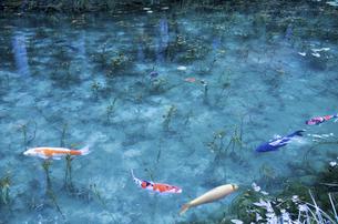 モネの池の写真素材 [FYI04683206]