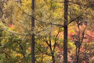 日本の秋の風景の写真素材 [FYI04683317]