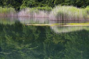 るり沼 五色湖沼群の写真素材 [FYI04683406]