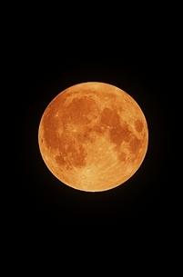 ハロウィンの満月の写真素材 [FYI04683423]