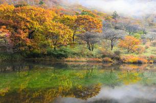 赤城山 覚満淵の紅葉の写真素材 [FYI04683500]