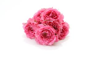 薔薇の花束の写真素材 [FYI04684012]
