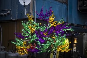 夕刻に映えるカラフルな居酒屋の電飾の写真素材 [FYI04684107]