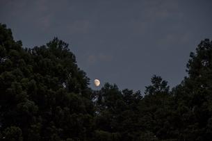 スギ木立ちと月の写真素材 [FYI04684117]
