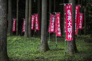 参道に並ぶ稲荷大明神ののぼりの写真素材 [FYI04684118]