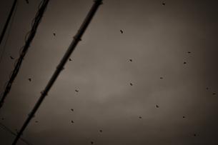 飛び去るカラスの群れの写真素材 [FYI04684119]