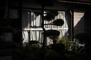 窓際の陰影の写真素材 [FYI04684122]