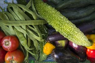 収穫された夏野菜の写真素材 [FYI04684131]