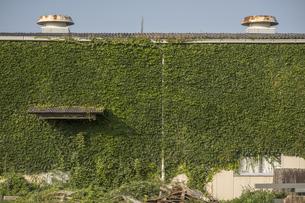 工場の壁を埋め尽くすつる植物の写真素材 [FYI04684132]