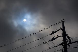 電線で休むムクドリの群れと雲間の太陽の写真素材 [FYI04684139]