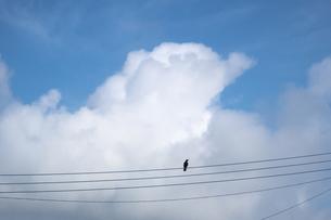 電線で休むカラスと夏雲の写真素材 [FYI04684145]