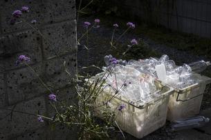 回収カゴに入ったペットボトルの写真素材 [FYI04684156]