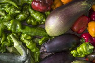 収穫された夏野菜の写真素材 [FYI04684163]
