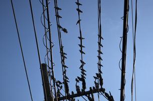 電線で休むムクドリの群れの写真素材 [FYI04684164]