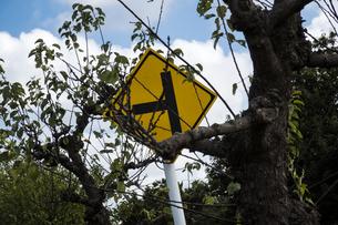 木々に絡んで立つ道路標識の写真素材 [FYI04684184]