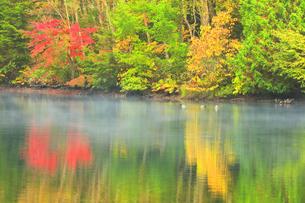 秋の志賀高原 三角池(みすみ池)にカモと靄の写真素材 [FYI04684271]