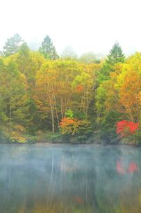 秋の志賀高原 三角池(みすみ池)にカモと霧の写真素材 [FYI04684275]
