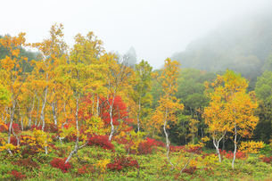 秋の志賀高原 田ノ原湿原と紅葉に霧の写真素材 [FYI04684277]