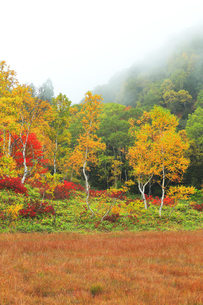 秋の志賀高原 田ノ原湿原と紅葉に霧の写真素材 [FYI04684278]