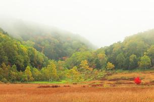 秋の志賀高原 田ノ原湿原と紅葉に霧の写真素材 [FYI04684281]