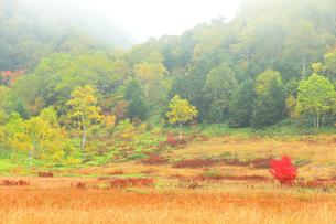 秋の志賀高原 田ノ原湿原と紅葉に霧の写真素材 [FYI04684282]