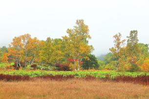 秋の志賀高原 田ノ原湿原と紅葉に霧の写真素材 [FYI04684283]