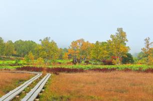 秋の志賀高原 田ノ原湿原と紅葉に霧の写真素材 [FYI04684284]