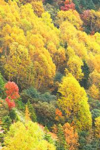 紅葉の森の写真素材 [FYI04684290]