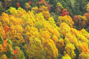 紅葉の森の写真素材 [FYI04684291]