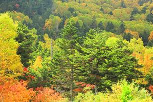紅葉の森の写真素材 [FYI04684292]