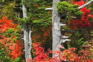 秋の木立の写真素材 [FYI04684293]