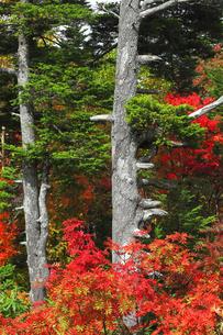 秋の木立の写真素材 [FYI04684294]