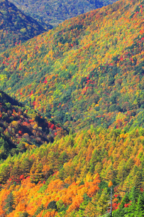 紅葉の森の写真素材 [FYI04684299]