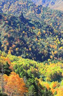 志賀高原の紅葉の写真素材 [FYI04684300]