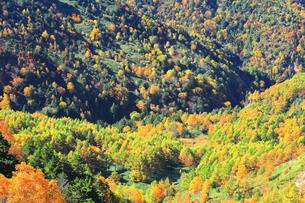 紅葉の森の写真素材 [FYI04684301]
