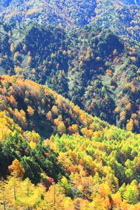 紅葉の森の写真素材 [FYI04684303]