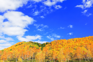紅葉の森と秋の空の写真素材 [FYI04684308]