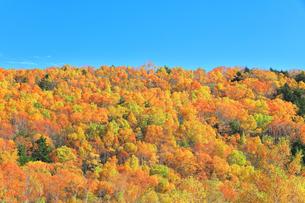 紅葉の森と秋の空の写真素材 [FYI04684309]