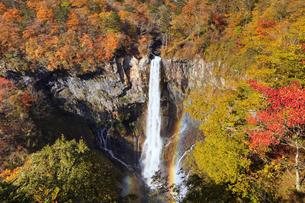 紅葉の華厳の滝の写真素材 [FYI04684343]
