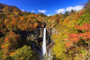 紅葉の華厳の滝の写真素材 [FYI04684345]