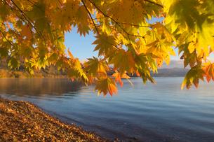 湖畔の紅葉の写真素材 [FYI04684438]