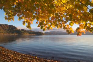 湖畔の紅葉の写真素材 [FYI04684439]