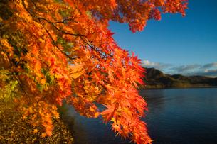 湖畔の紅葉の写真素材 [FYI04684445]