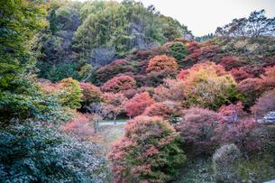 紅葉のある風景 長野県箕輪町のもみじ湖にての写真素材 [FYI04684722]