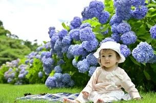 紫陽花と幼児の写真素材 [FYI04684962]