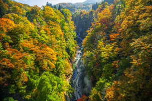 秋の小安峡の写真素材 [FYI04685014]