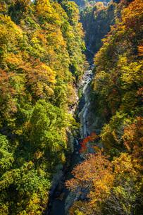 秋の小安峡の写真素材 [FYI04685015]