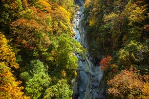 秋の小安峡の写真素材 [FYI04685016]