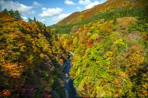 秋の小安峡の写真素材 [FYI04685017]