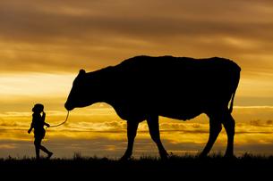 夕陽を背景に草原の牧場で牛を曳く女の子のシルエットの写真素材 [FYI04685092]